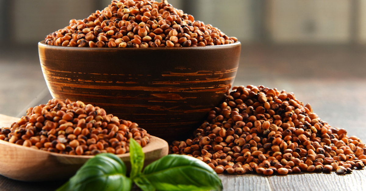Farines sans gluten: La farine de Sorgho, comment l'utiliser?