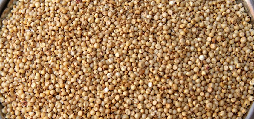 Les aliments sans gluten : sorgho